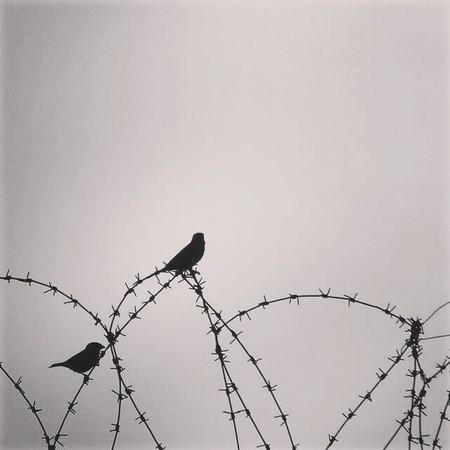 Zenduni76876876876876876786876876868 دانلود آهنگ آذری دنیا اوزی زنداندی زندان نیه لازمدی