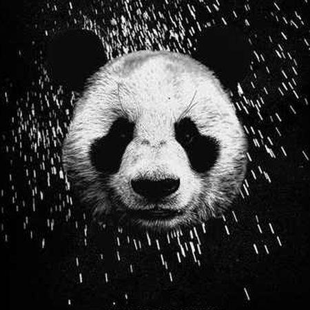 Panda3895693856298753298525692 دانلود آهنگ Desiigner به نام Panda